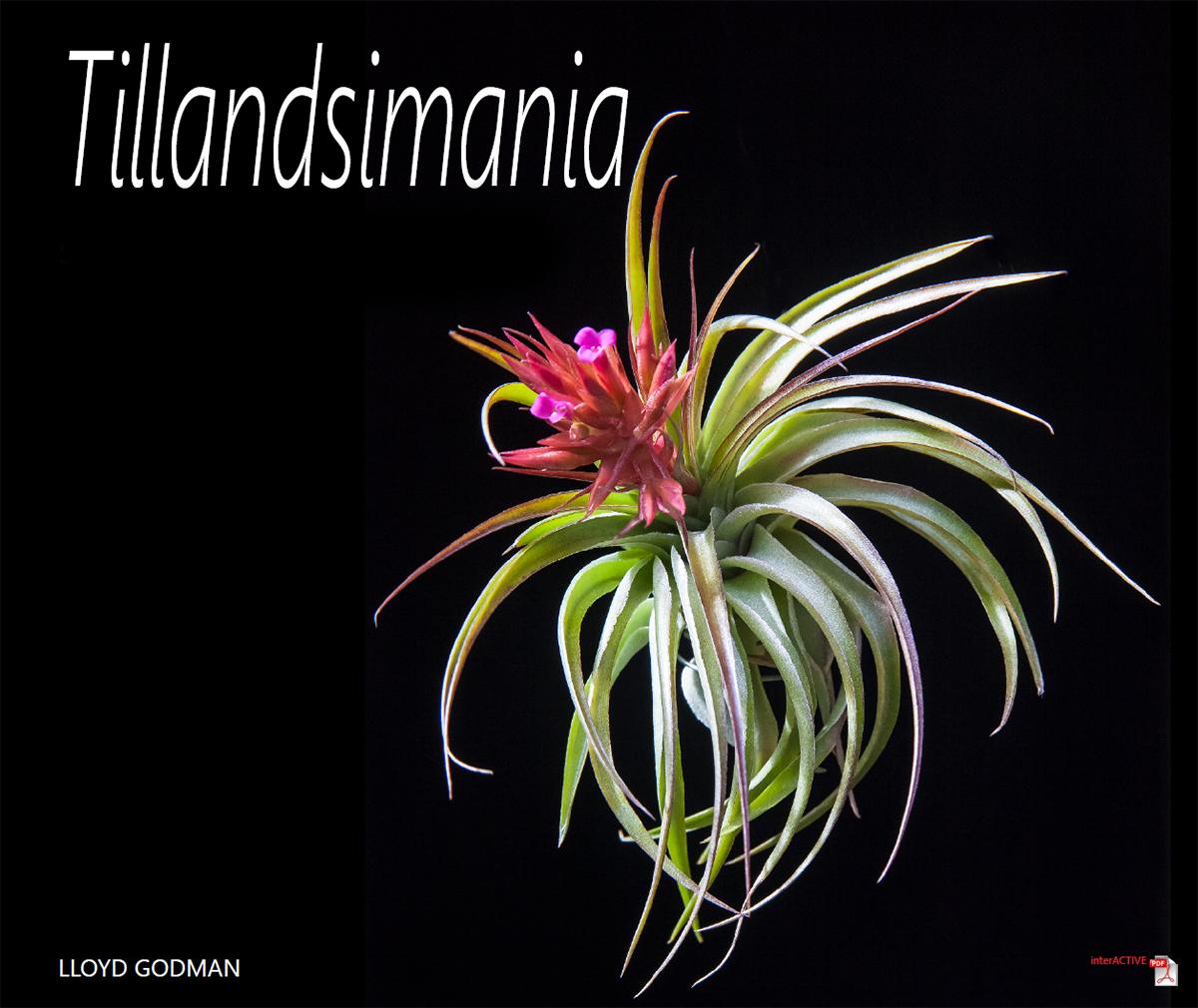 Tillandsia Genus Lloyd Godman Catalogue Of Bromeliad Plants